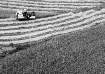 3560万亩小麦丰收在望 全省各地将陆续开镰,单产水平有望超过上年