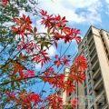 11月芜湖楼市上市预告新鲜出炉