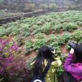 清明小长假芜湖景区接待游客逾42万人次