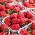 """我买的是假草莓?专家:没有""""奶油草莓""""这一品种"""