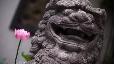 """【荷塘""""阅""""色】上海古老园林尽显荷莲之美"""