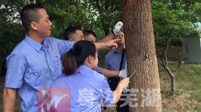 芜湖市白蚁防治所开展树木白蚁危害复查