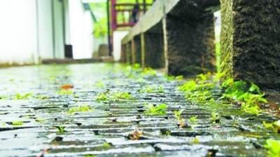 芜湖进入梅雨期 雨量较常年偏少