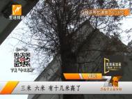沐春园:三十年大树致地面开裂 居民担心求帮助