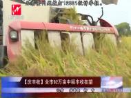 【庆丰收】全市92万亩中稻丰收在望