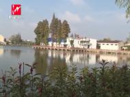 弋江镇:多管齐下共建绿色生态家园