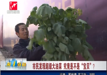 逆天!在芜湖,三九天里竟然开油菜!
